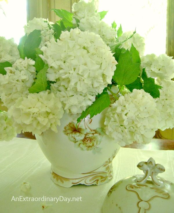 Snowball Viburnum :: Easy Flower Arranging Tips :: AnExtraordinaryDay.net