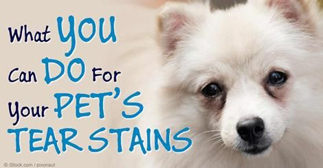 Dog tear stains by Yourhearttomine on Dog owners Pet