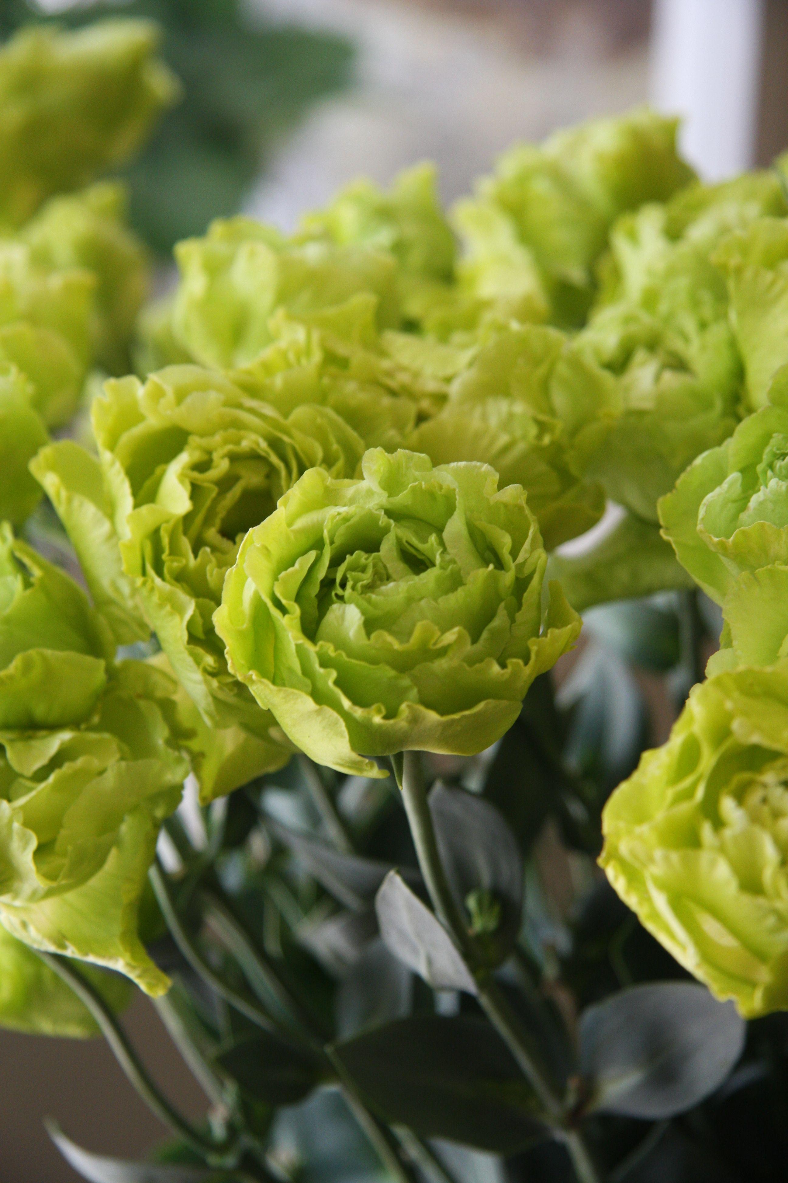 может быть цветы зеленого цвета в саду фото съемка съемка