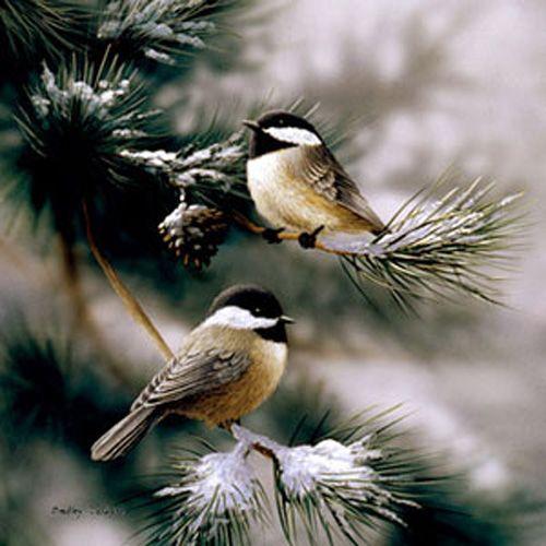 Chickadees N Snow By Bradley Jackson Nature Up Close