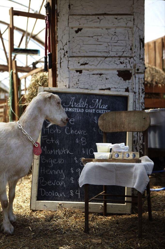 pin by gail on the old goat cute goats goat farming rh za pinterest com