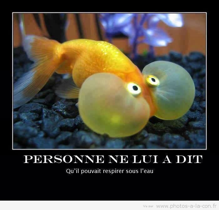 """Résultat de recherche d'images pour """"poissons con"""""""