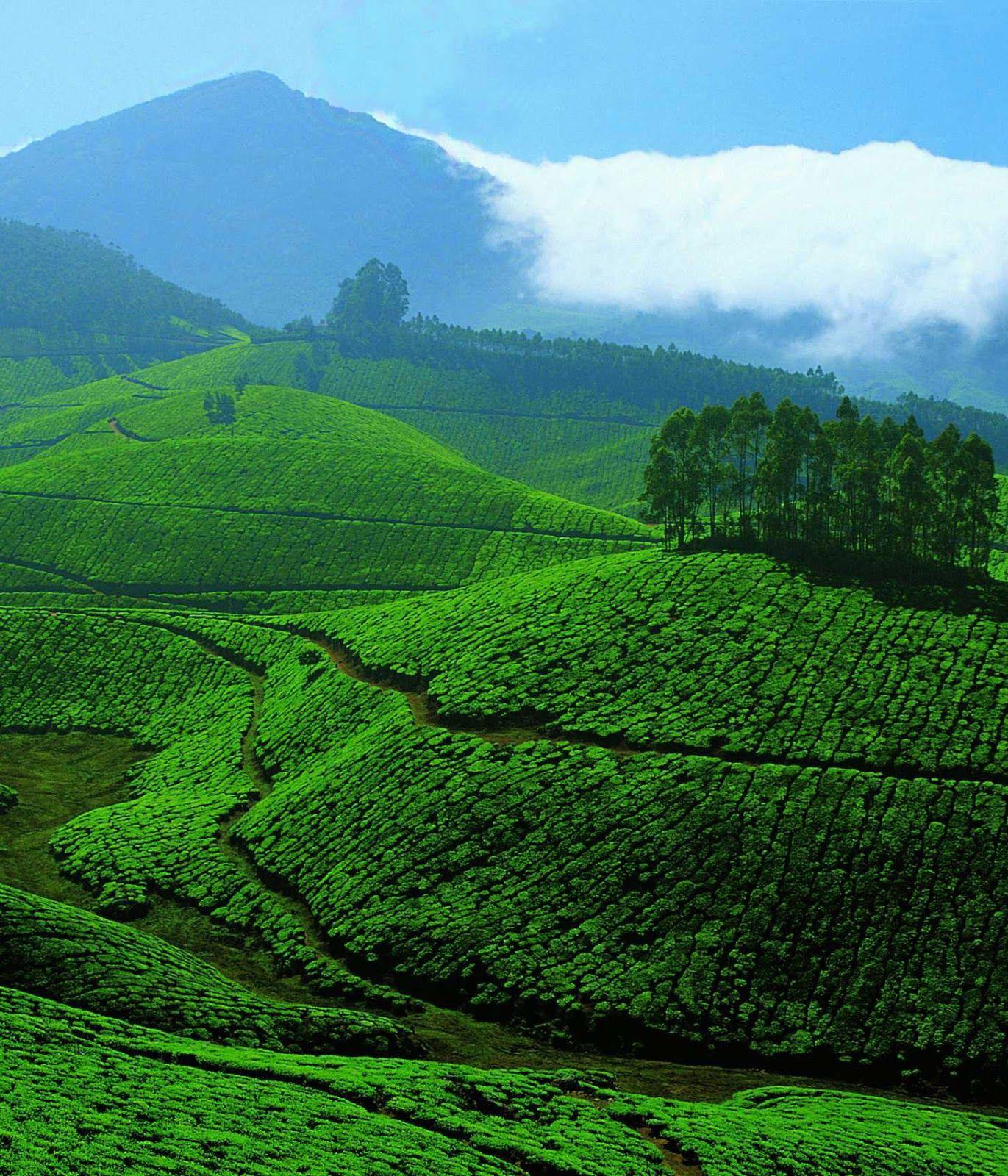 Munnar, Kerala, India. Tourist places, Places to visit