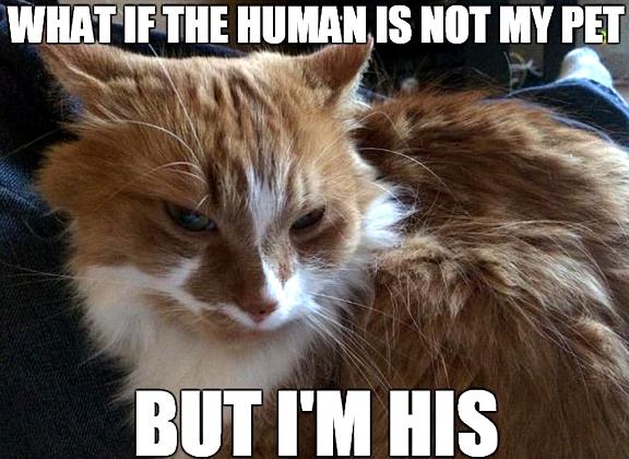 Top Laughing So Hard Cat Memes Cat Memes New In 2020 Cute Cat Memes Funny Cat Memes Cat Quotes Funny