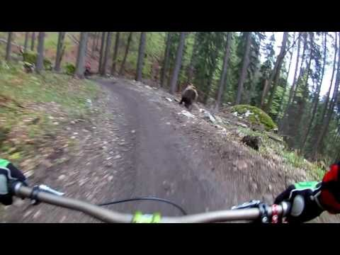 6d9d84ef8de33 Watch  Bear Charges Mountain Biker at Slovakian Bikepark - Singletracks  Mountain Bike News