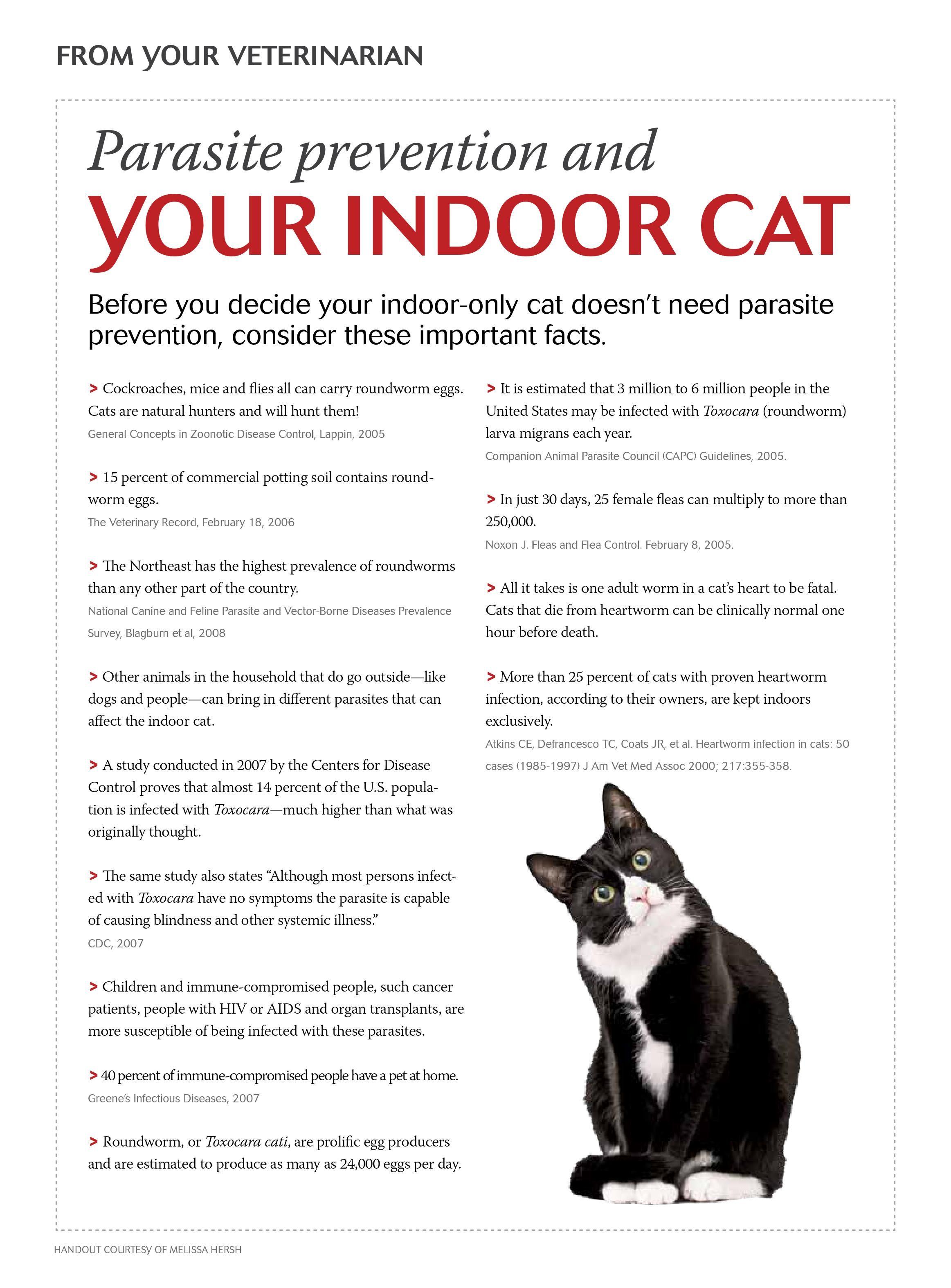 Santa Rosa Ca Animal Hospital Petcare Veterinary Hospital Santa Rosa Ca Cat Care Cats Cat Health