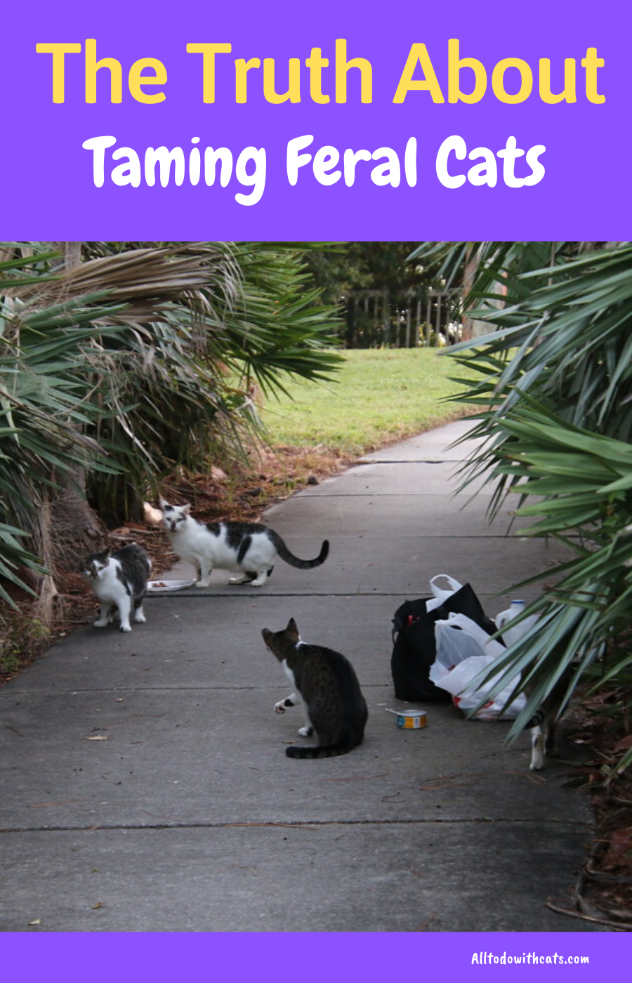 Can You Tame A Feral Cat What You Should Know In 2020 Feral Cats Cat Care Tips Cat Care