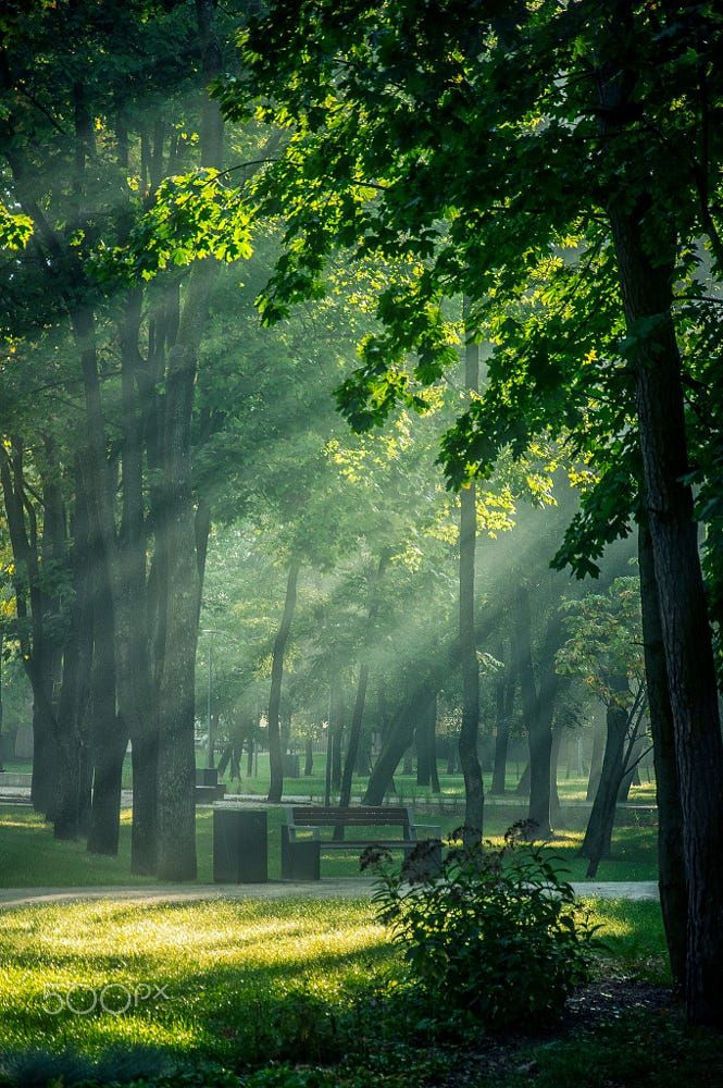 Green Sunrise By Katarzyna Soluch On 500px Park Trees Leaves Landscape Sunrise Morning Nature Green Sunr Beautiful Nature Nature Pictures Nature Aesthetic