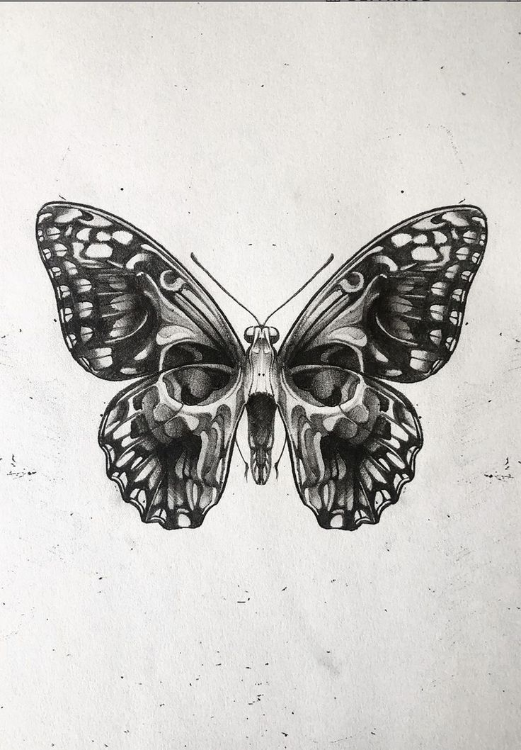 Beautiful skull, butterfly artwork