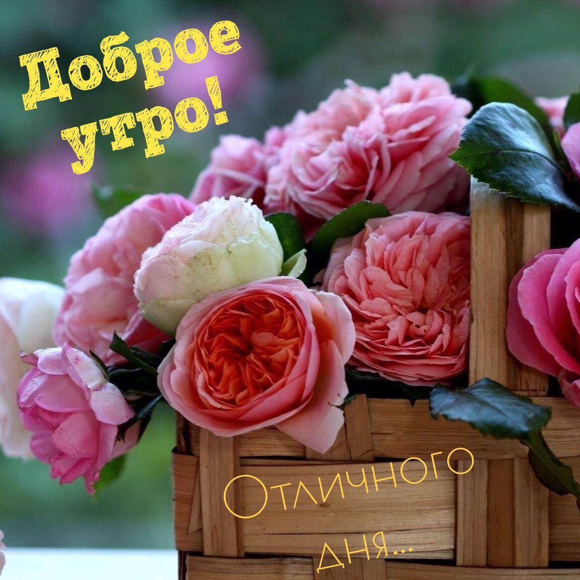 Открытки, картинка букет роз с надписью доброе утро
