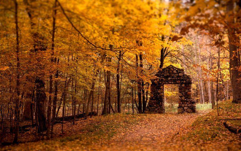 hd autumn forest wallpaper autumn autumn leaves wallpaper rh pinterest com