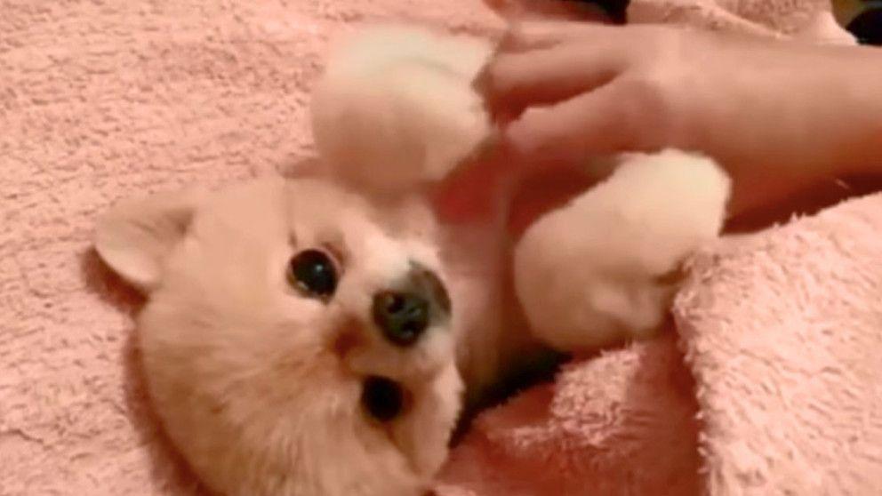 The Animal Rescue Site Blog #Animals