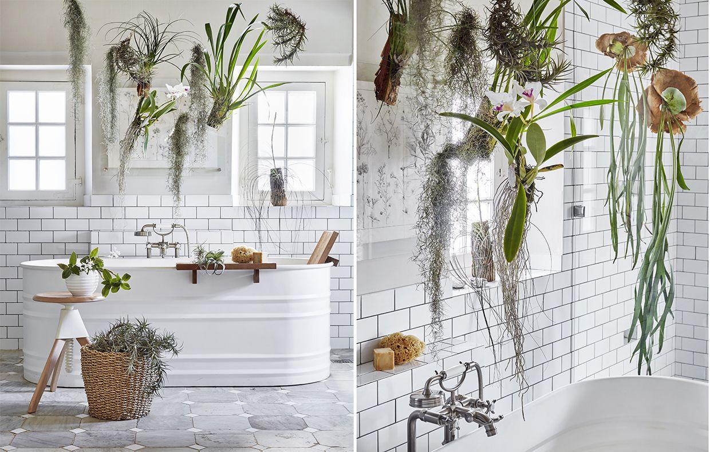 Le piante da mettere in bagno: tillandsie e orchidee | piante a casa ...