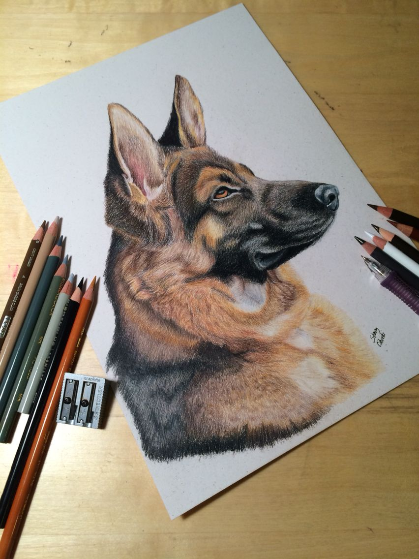 German Shepherd Pet Portrait Colored Pencil Drawing Visit My Etsy Shop To Order Prints