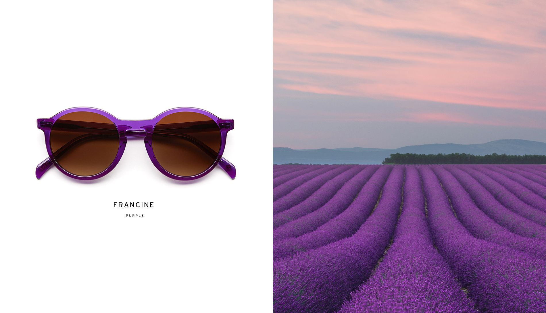 SALT. Francine in Purple... (With images) Eyewear brand