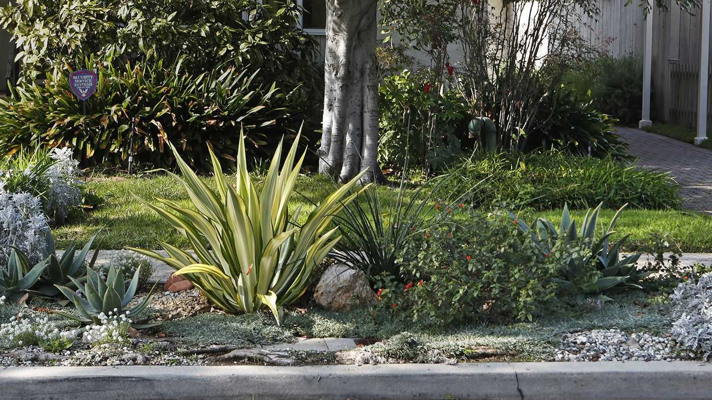 Donu0027t Make These Mistakes When Transforming Your Water Wasting Parkway.  Water WiseGarden ...