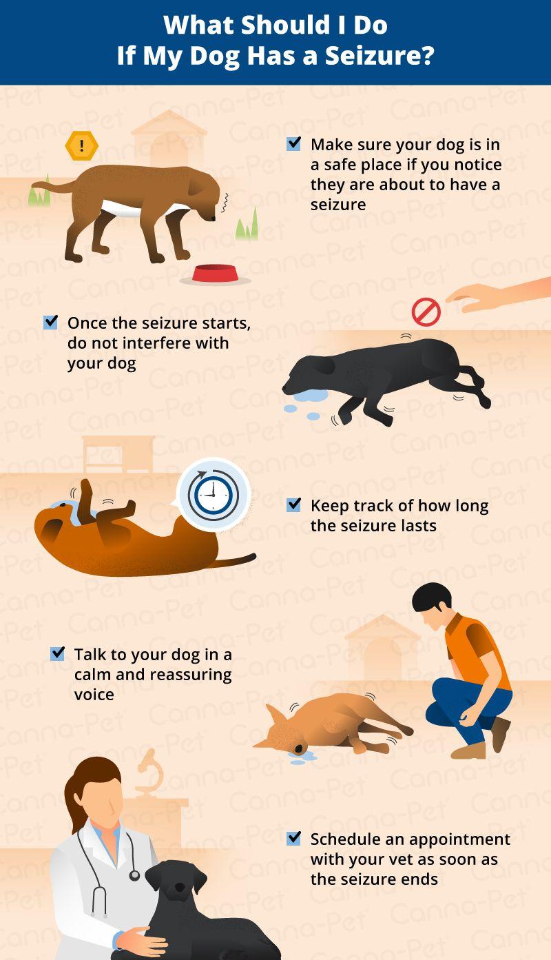 How Long Do Dog Seizures Last Canna Pet Dog Seizures Animal