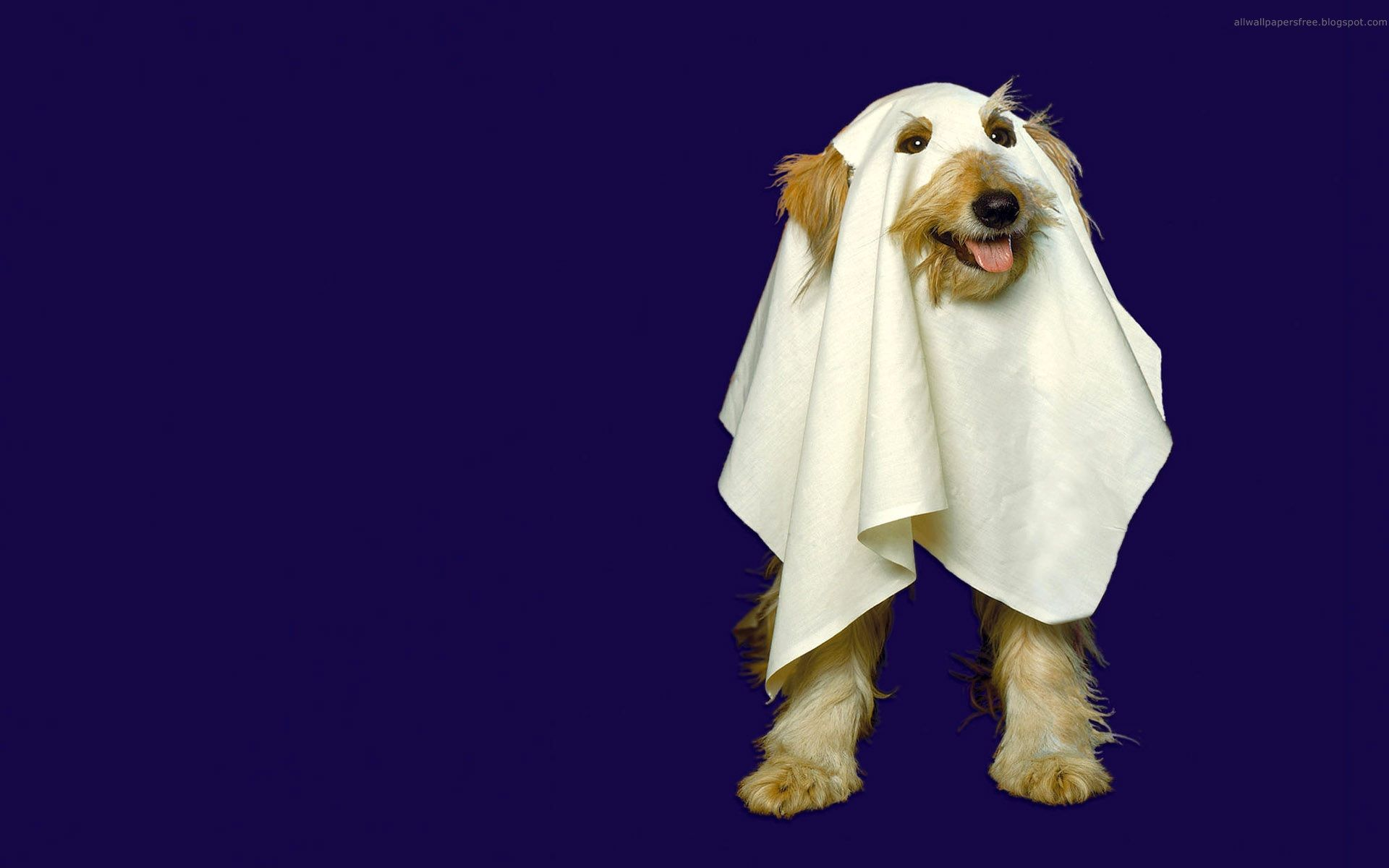 Ghost Dog Halloween Animals Halloween Desktop Wallpaper Ghost Dog