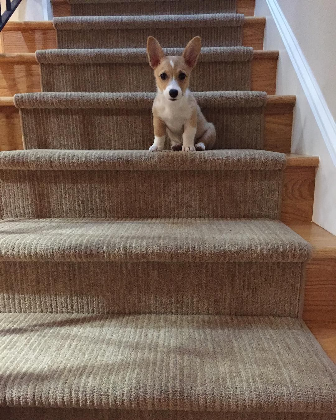 I Love Going Up The Stairs But I Can Never Seem To Get Down