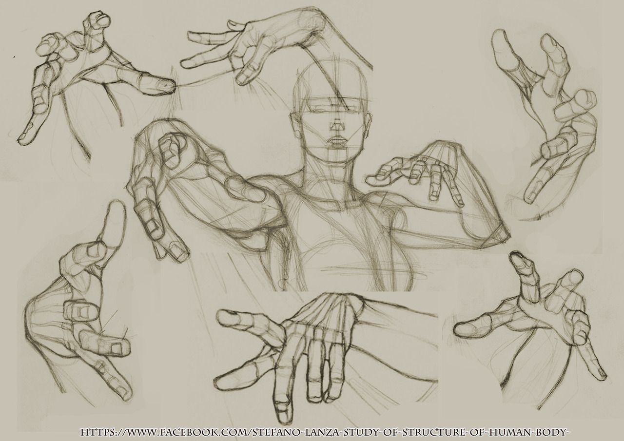Anatomy Tumblr Anatomy In 2019 Anatomy For Artists How To