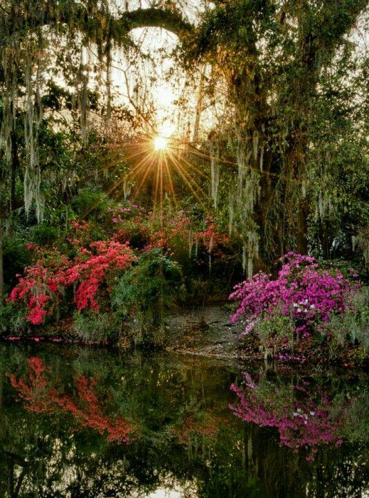 0aee3e4f5b7be2971794d18a2ef80096 - Magnolia Plantation And Gardens South Carolina