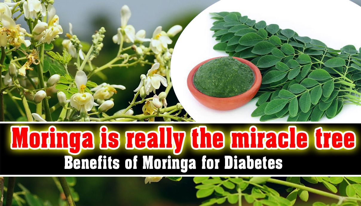 Pin By Deals Today On All About Health Miracle Tree Moringa Tree