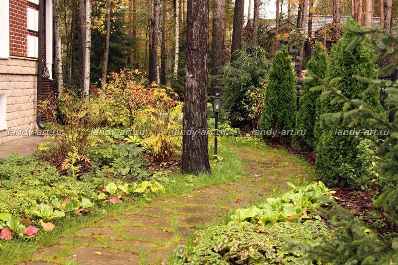 Сад в лесу от Светланы Чижовой