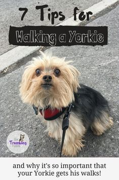 Learn more information on yorky. Have a look at our website.