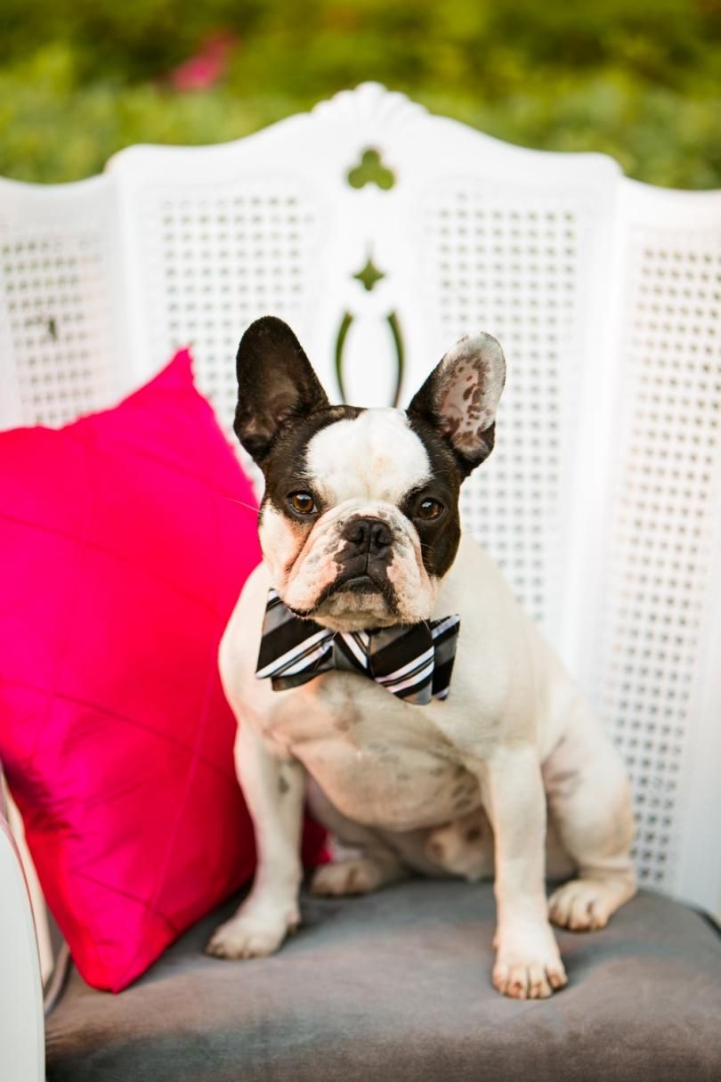 This Darling Doggy Is Wedding Ready With His Striped Bow Tie