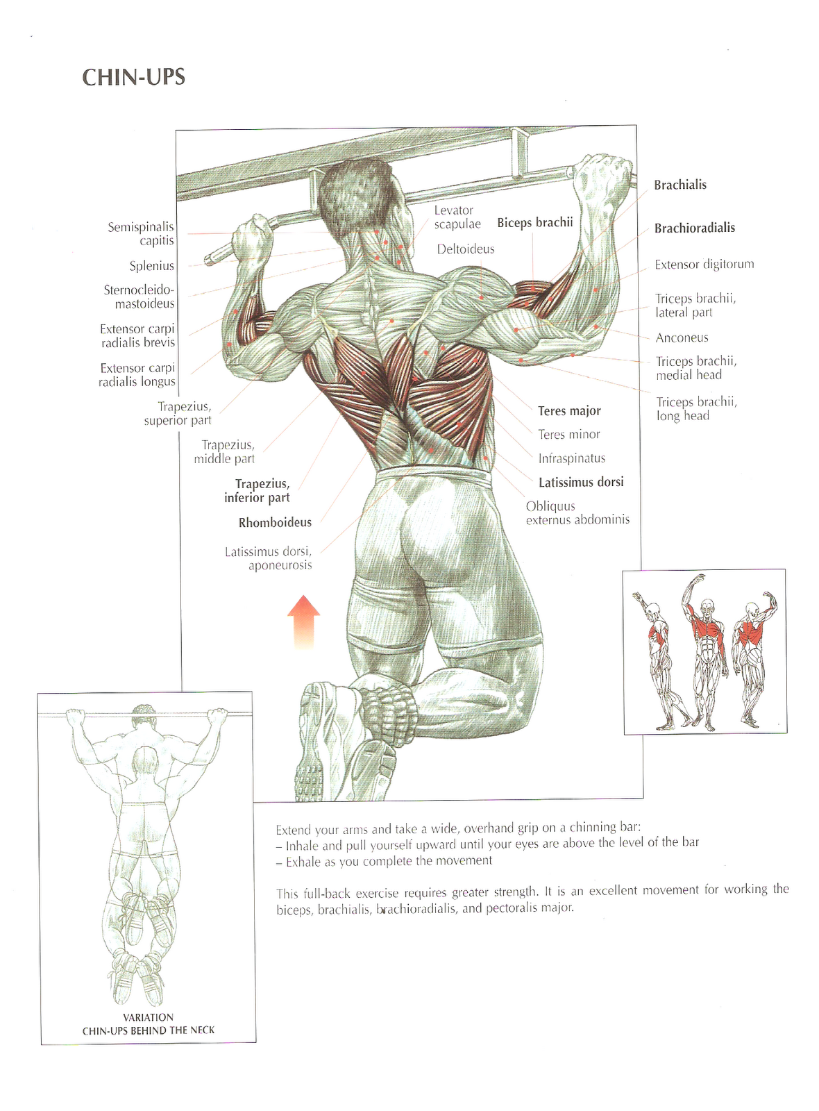 Source: Strength Training Anatomy by Frederic Delavier - Getting fit ...