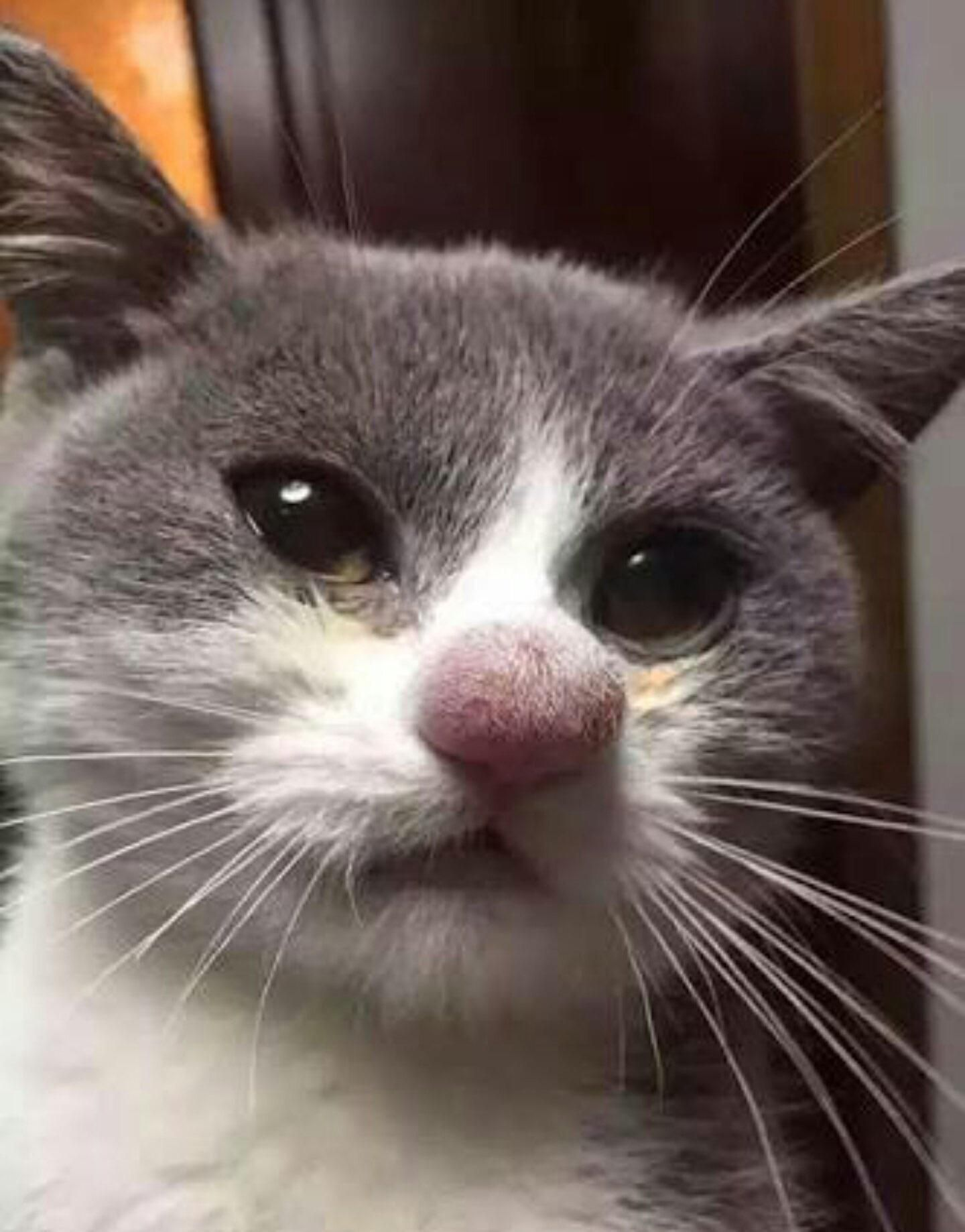 Why you shouldn't try to hit a bee Cute cats, Funny cat