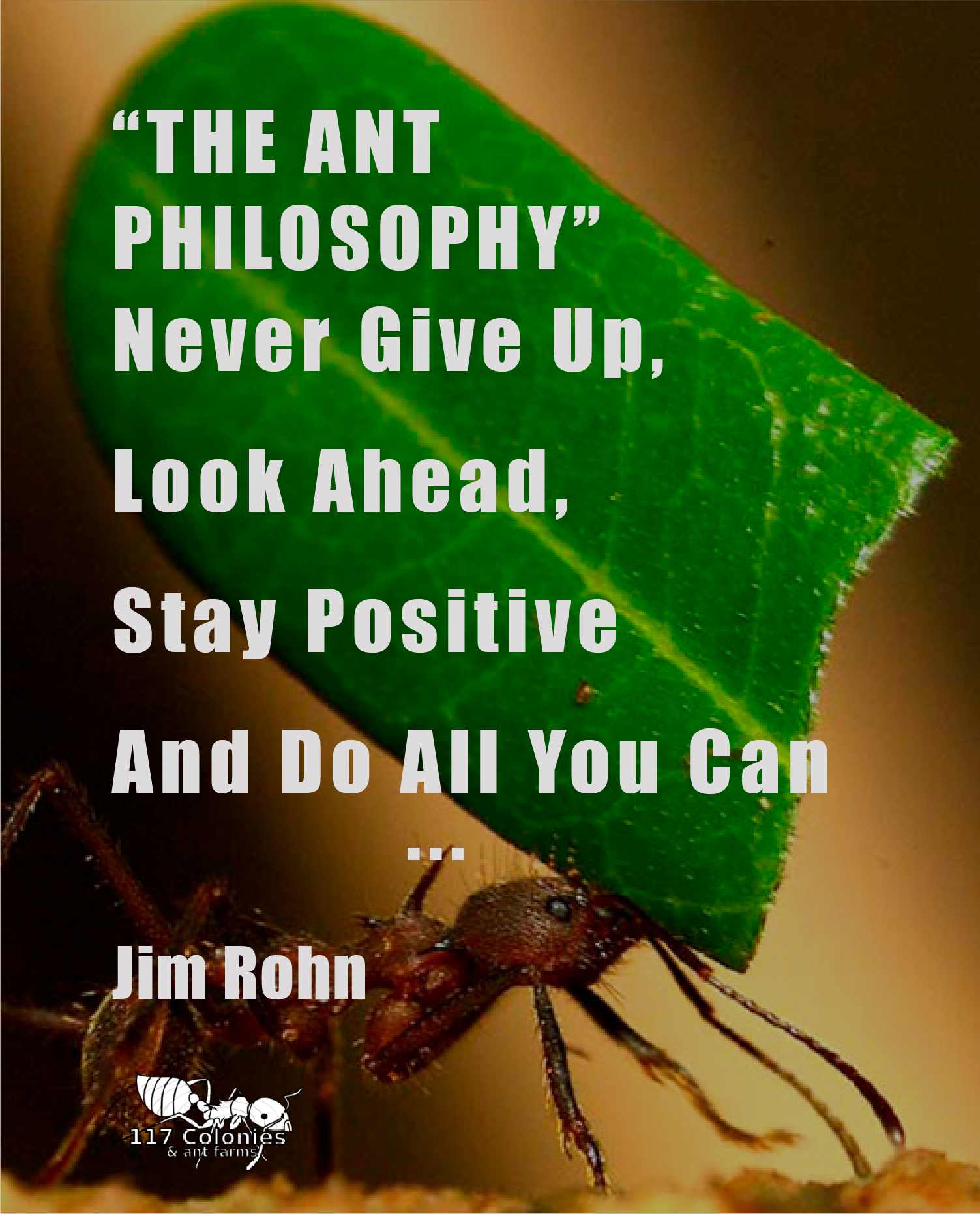 """""""The Ant Philosophy never give up, Look Ahead, Stay"""