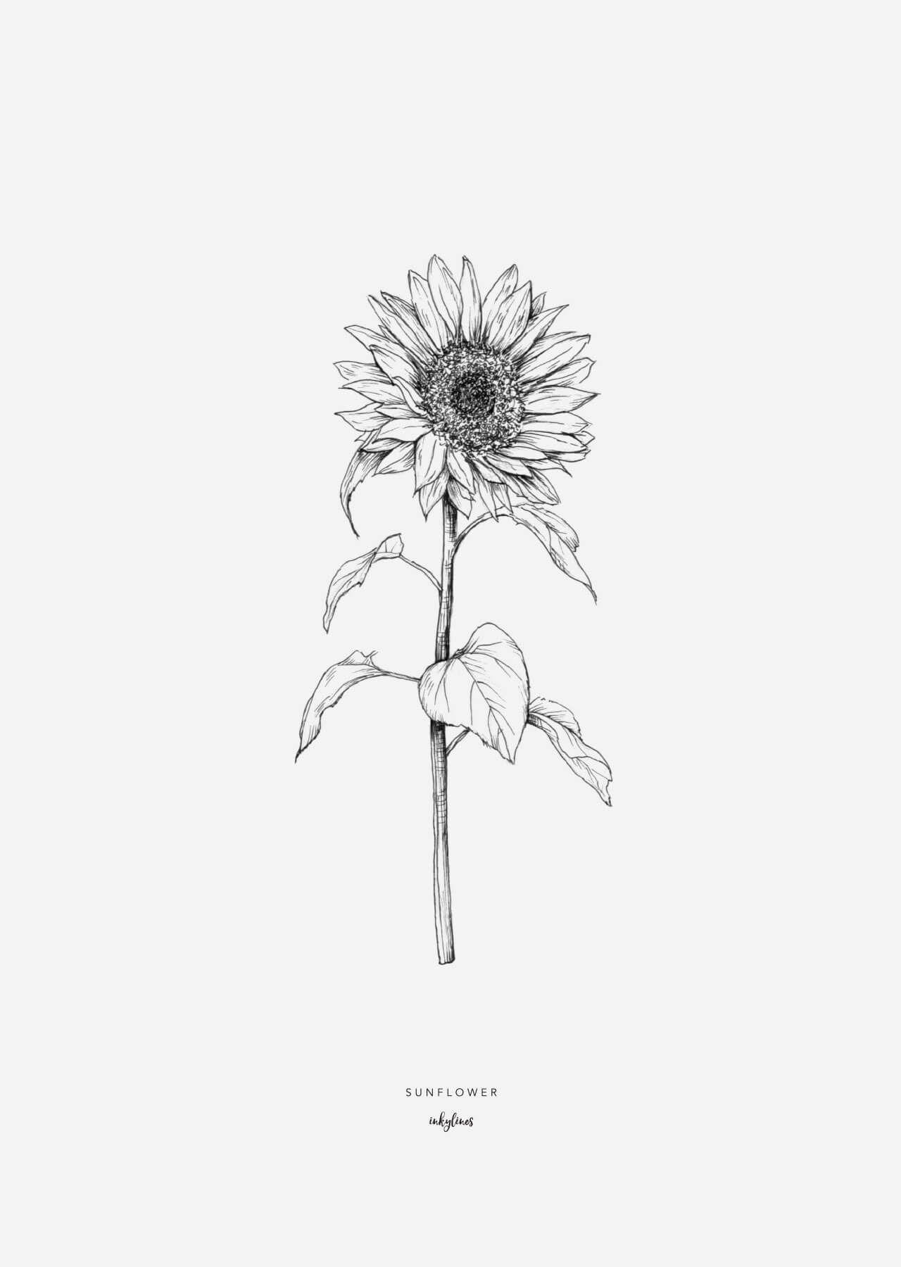 Photo of Printables – Sunflower
