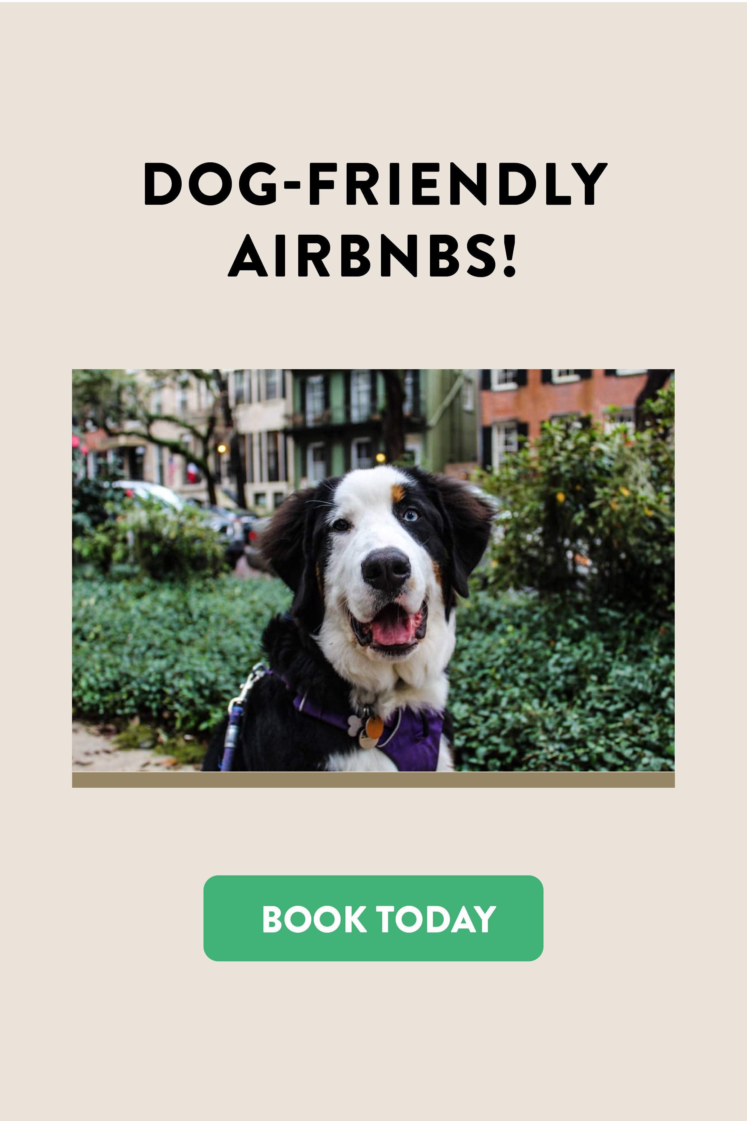 dog friendly airbnb and vacation rentals in savannah ga lucky pup