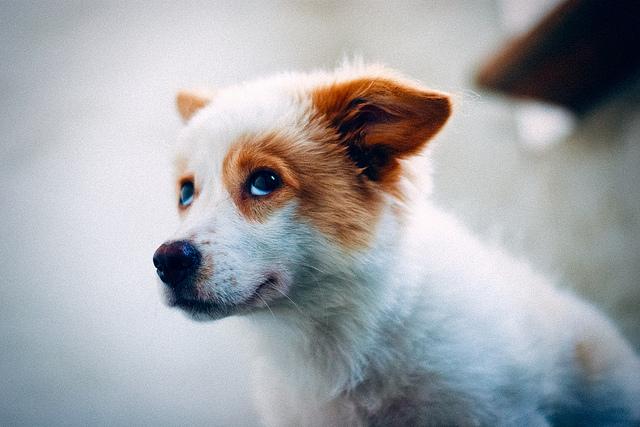 Cute Little Red Acd Dogs Ich Liebe Hunde Susse Tiere Und Tiere
