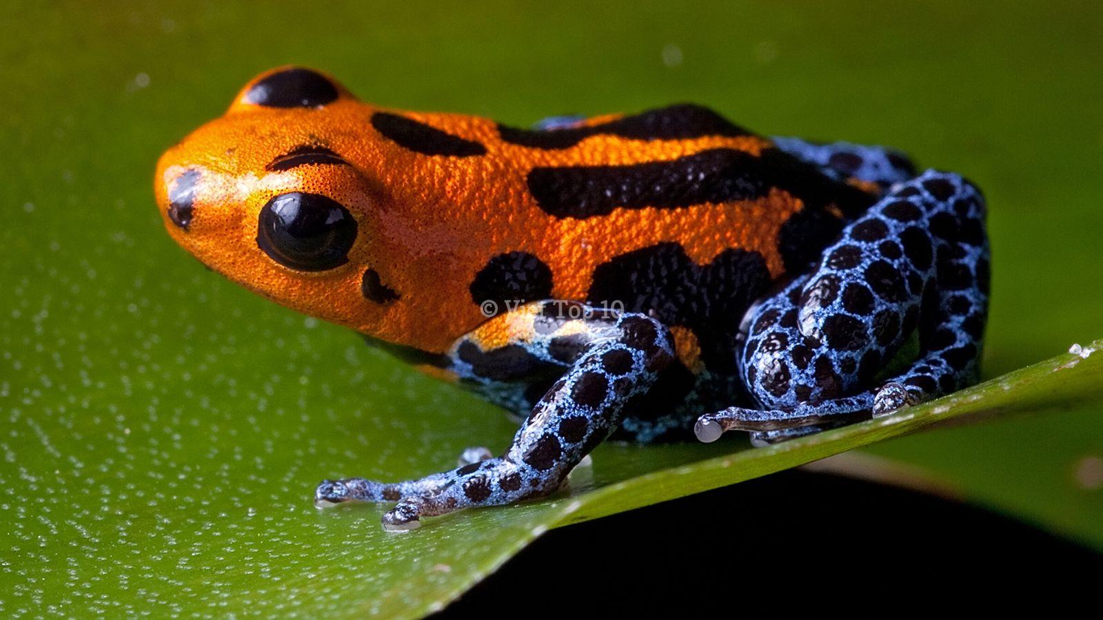 10 điều kỳ lạ và thú vị nhất trong rừng Amazon - việt top 10 - việt top 10 net - viettop10