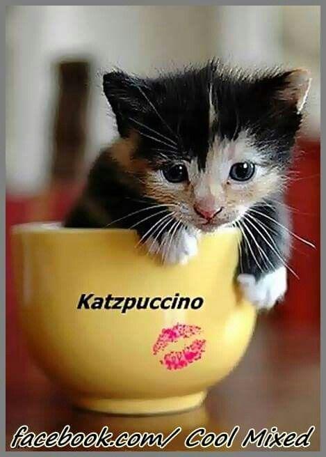 Pin von maria dezenski auf cute Lustig, Baby katzen und