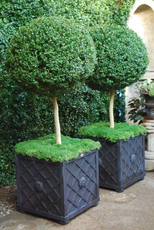Topiary Decorating Ideas Part - 18: Patio Decorating Ideas Boxwood Topiaries Plant Containers Round Shapes