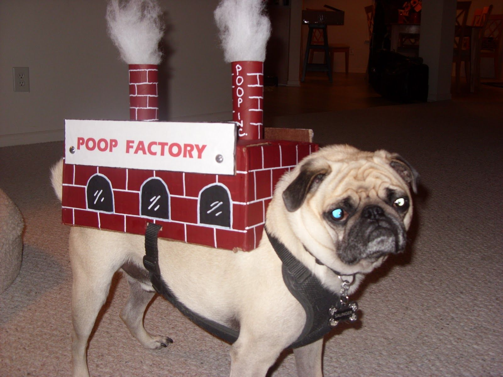 meet darice the pug factory