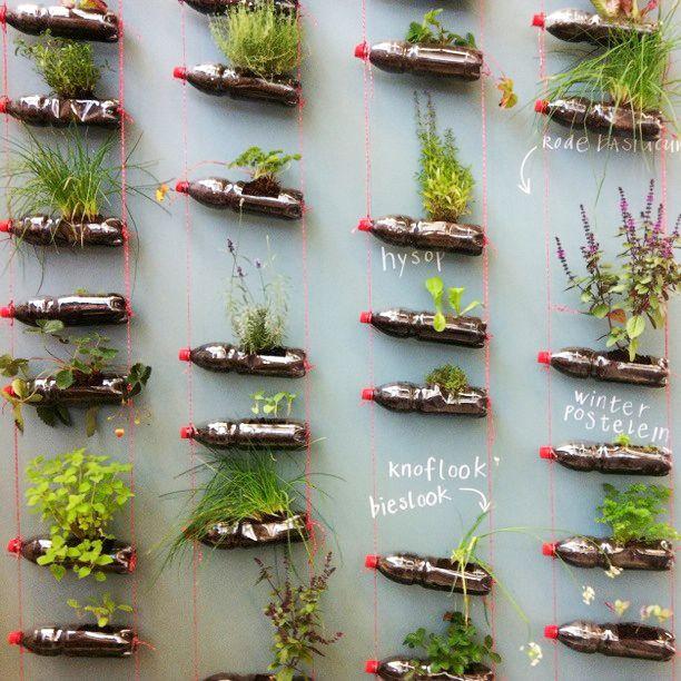 Herb garden in plastic bottles