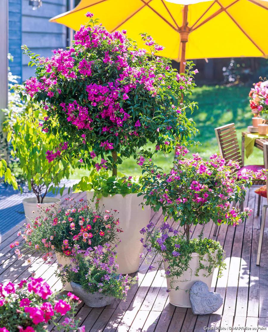 Le Bougainvillier Bien Le Choisir Et L Entretenir Bougainvillier Amenagement Jardin Paysager Joli Jardin