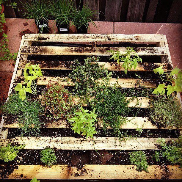 vertical pallet garden   garden dreams   Pinterest   Pallets garden ...