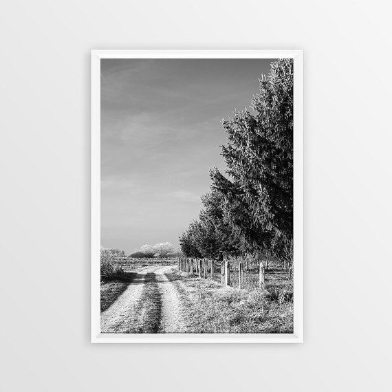 Black white road print photo instant download digital monochrome nature photography country pine tree path way