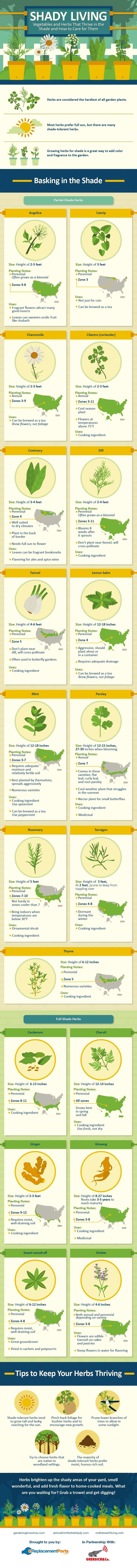 Vegetables and Herbs That Thrive in the Shade and How to Care for Them #Infographic