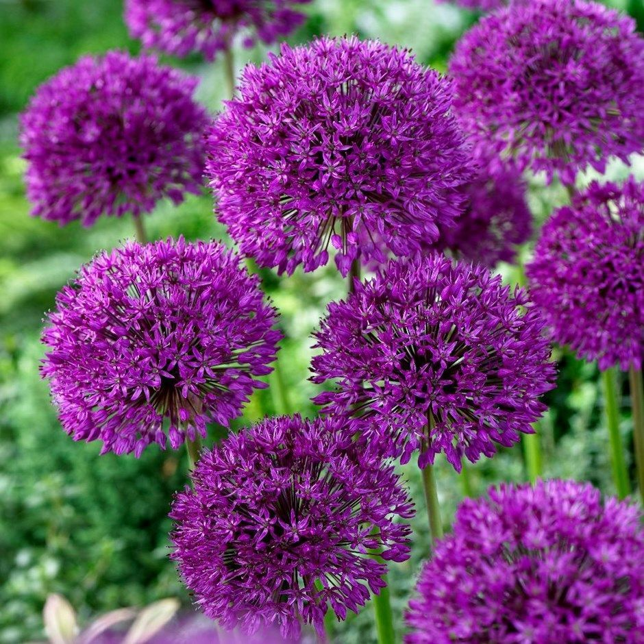 How To Have Year Round Colour In Your Garden In 2020 Bulb Flowers Longfield Gardens Plants