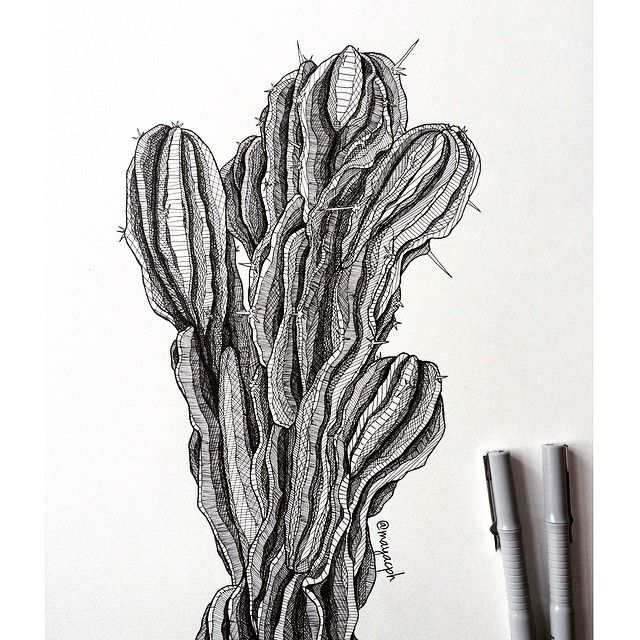 Redrew The Original Cactus. Quite Tedious - But I Wanted More Contrast And Detail Than The ...