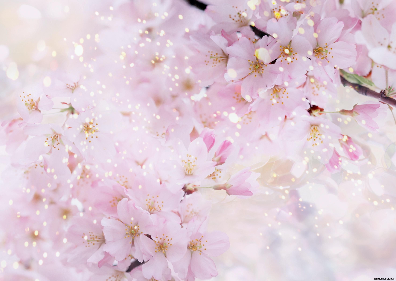 Fon Dlya Fotoshopa Odnotonnyj Poisk V Google Cvetenie Cvety