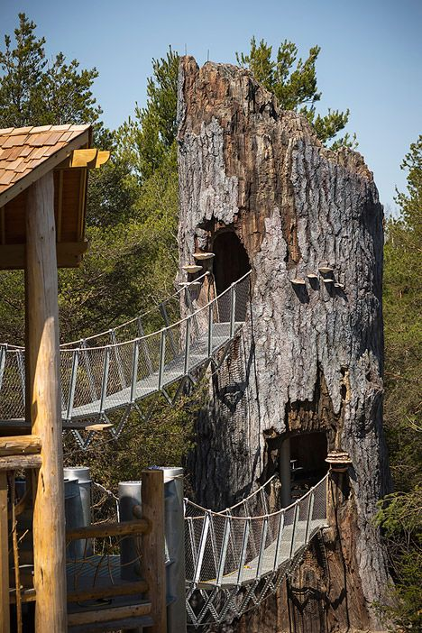 wild walk is a treetop trail that rises above a forest in new york rh pinterest com