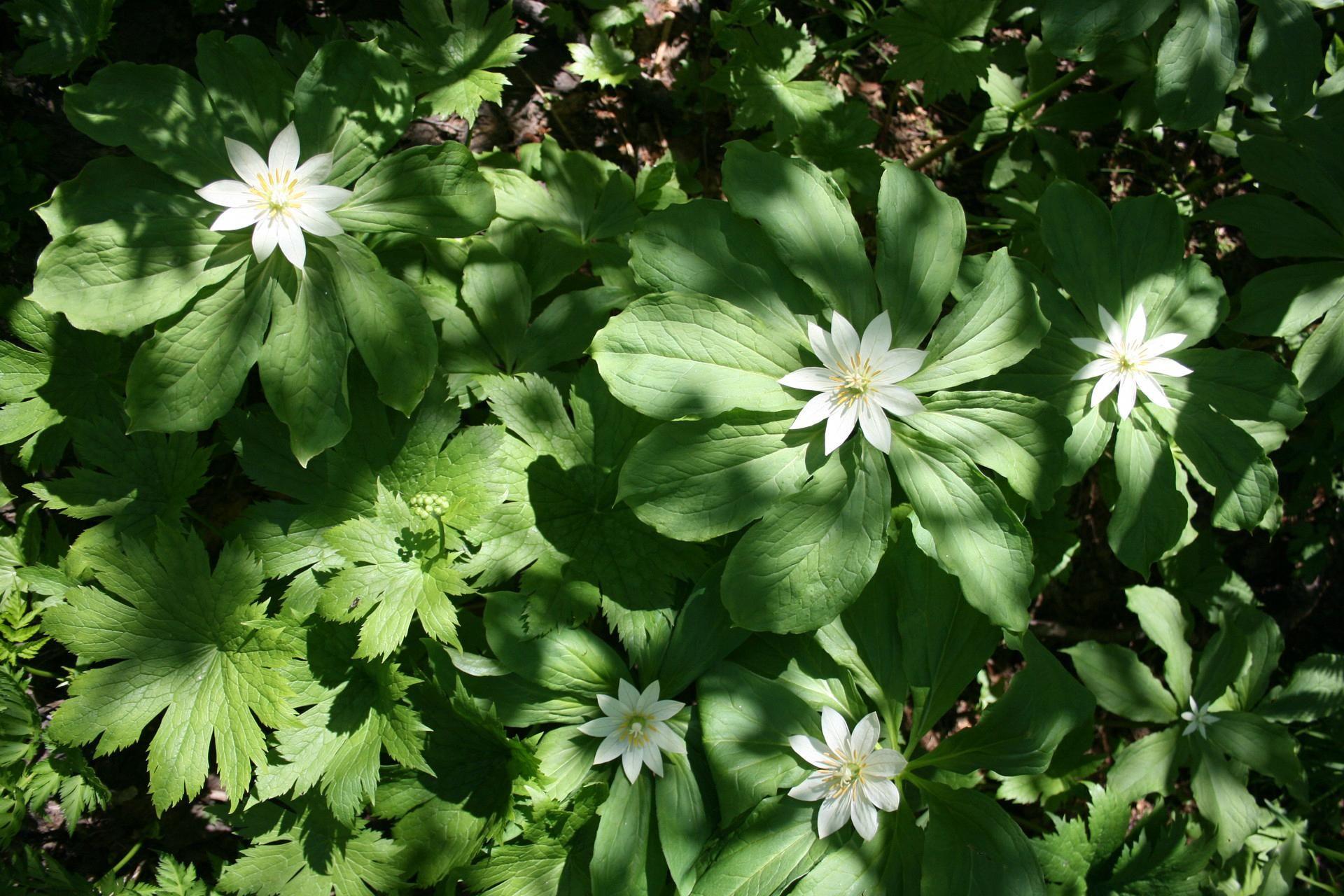 Planting Seeds Worksheets Quotesaboutplantingseedsforlife