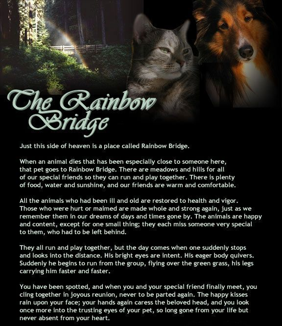 The Rainbow Bridge Poem Pet Memorial For Loss Of A Cat Or Dog Sympathy I Wonder If George S Is Still There